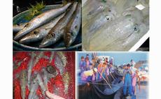 Farmers Inn Shirogoro - Raw fish, kayaking, fishing